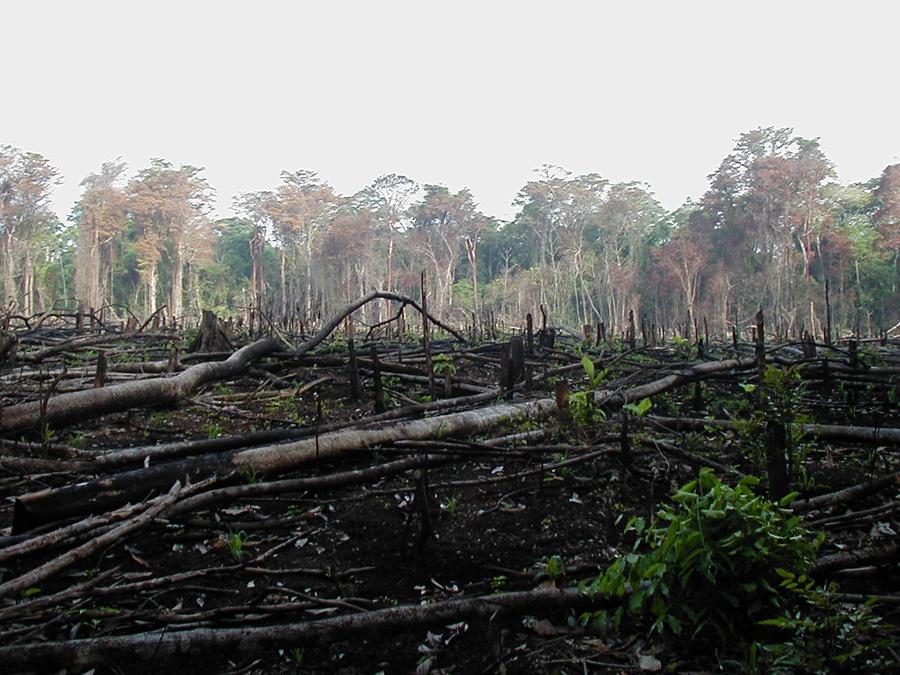 שריפת יער בדרום אמריקה