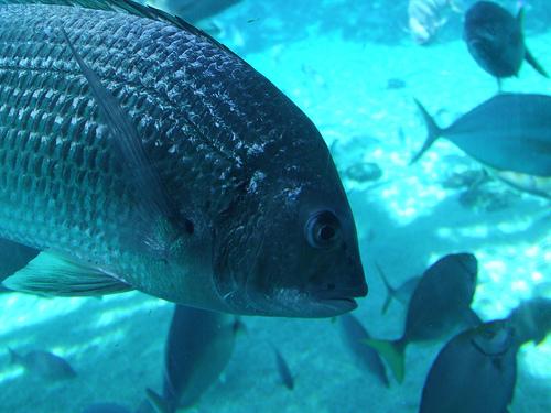 דגים בטבע