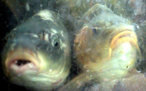 בריכות הדגים - מבט מבפנים