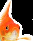 5 סיבות לא לאכול דגים