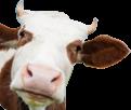 5 סיבות לא לאכול בשר